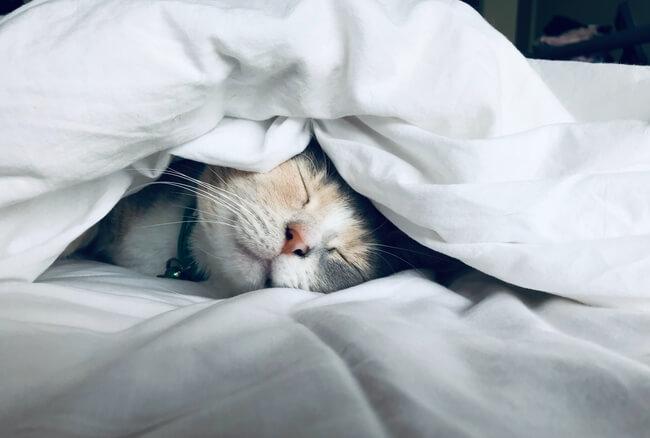息抜きに昼寝